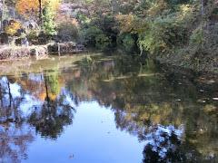 忍野八海・出口池