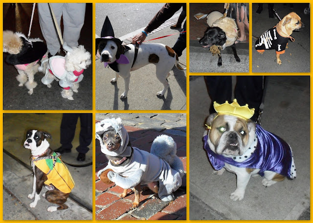 Haunted Happenings, Dog, Costumes, Salem, Massachusetts, happy, smile
