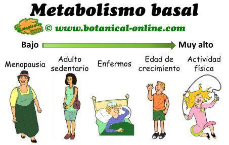 Cinco cuestiones sobre formula para calcular el metabolismo basal