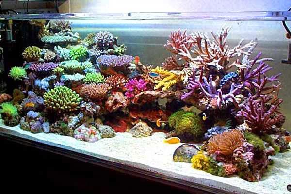 Akuarium Air Laut%2B1