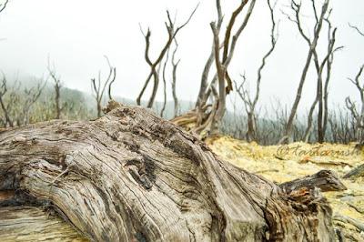 Kumpulan Foto Indahnya Hutan Mati Gunung Papandayan