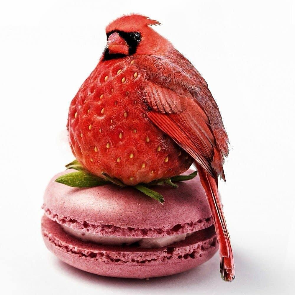 Strawberry-angry-bird - photo manipulation