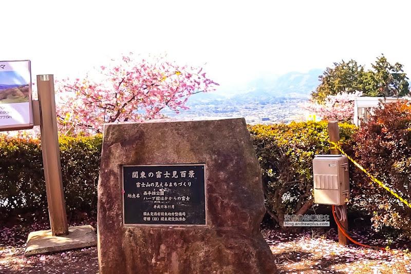 matsuda-sakura-25.jpg