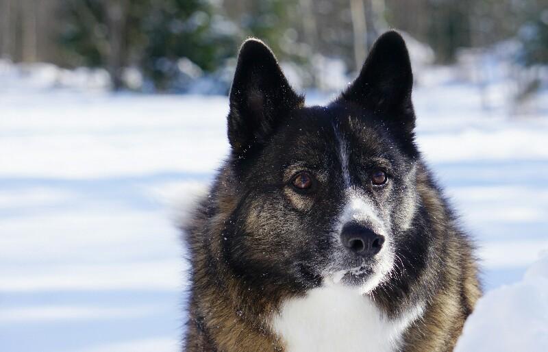 Koira, löytökoira