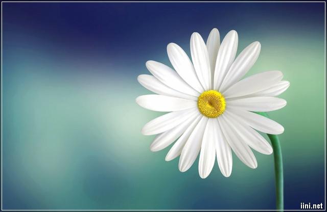 ảnh hoa trắng đẹp