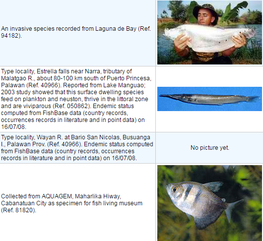 List of Pelagic Fish in the Philippines