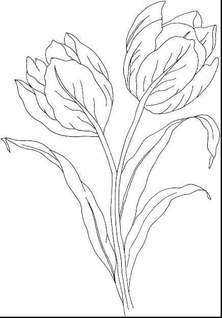 Amazing Printable Tulips Flower Coloring Pages With Tulip Coloring Pages