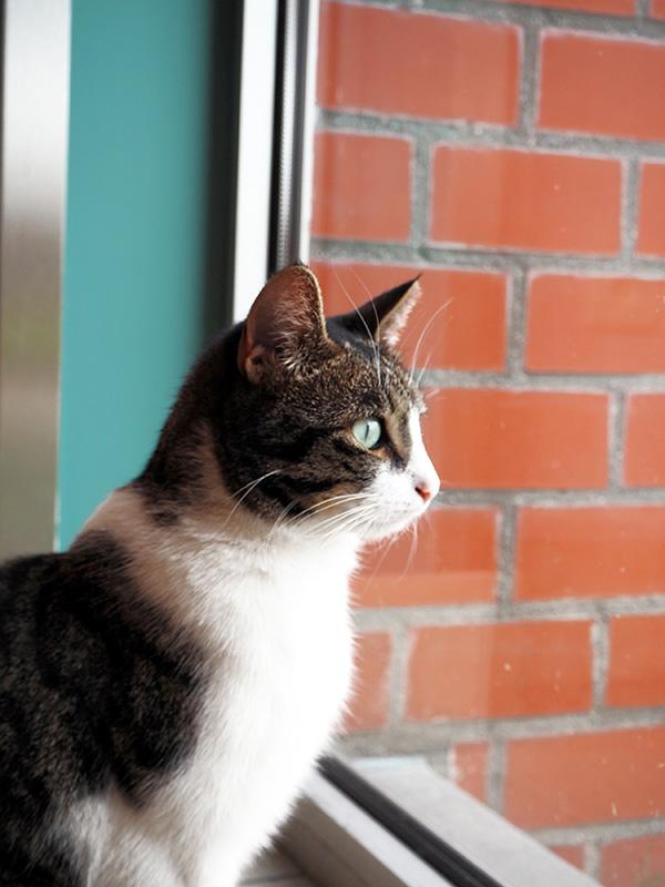 residential care centre cat