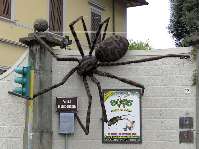Giant spider, Natural History Museum of Mediterranean, Via Roma, Livorno