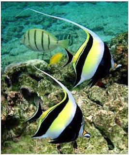 Jenis Ikan Laut Hias Aquarium Idolsfish