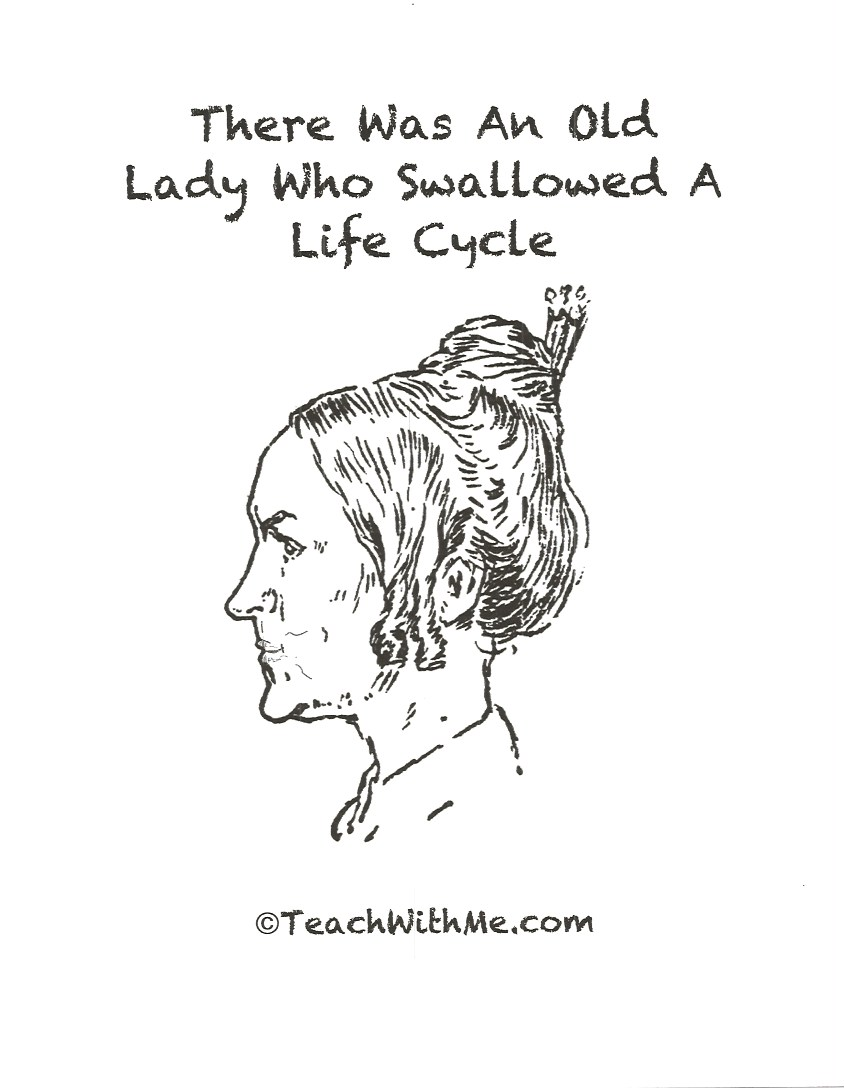 There Was An Old Lady Who Swallowed A Life Cycle