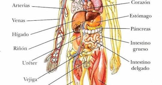 El Cuerpo Humano: EL CUERPO HUMANO: EL CUERPO HUMANO