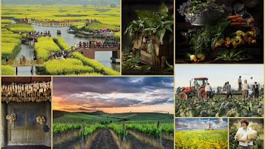 Tierra Generosa. Fotografías premiadas en IGPOTY N.9: Bountiful Earth