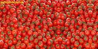 Tomatoes deep red colour is due to lycopene.