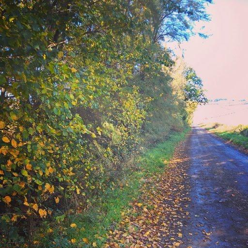 meraviglie dell'autunno a pesaro