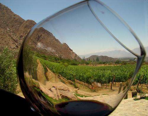 Los sabores minerales del vino