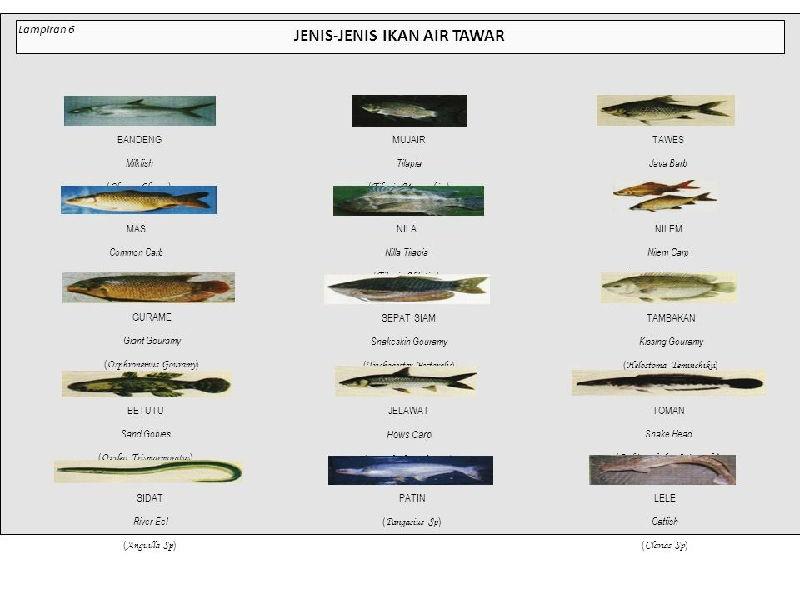 Nama Latin dan Ilmiah Ikan