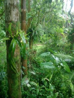 Pflanzen des Regenwaldes