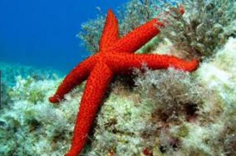 Sensor bintang laut