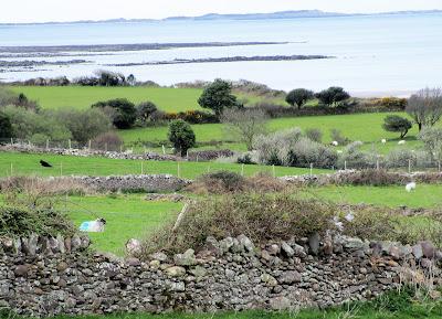 lampaat Irlannissa