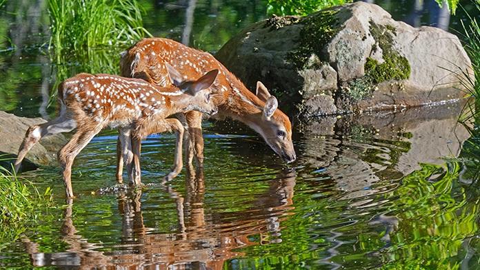 Un amore sempre limpido è come l'acqua che scorre