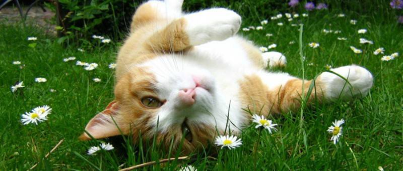 Φυτά που είναι τοξικά για την Γάτα