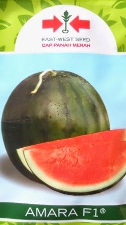 buah besar, daging merah,Daging merah, Harga Murah, buah bulat, semangka non biji, semangka Amara, Cap Panah Merah