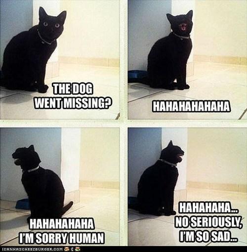 Cat Keeps Hissing At Dog