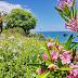 flores que revelam o ilhéu