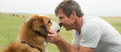 a-dogs--purpose-movie-trailer-clips-images-and-posters