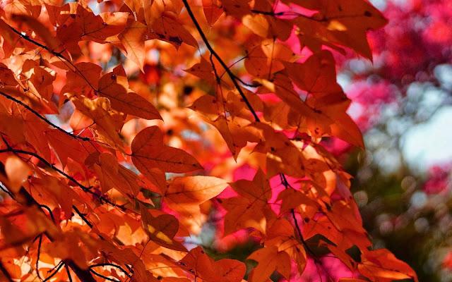 Takken met oranje herfst bladeren