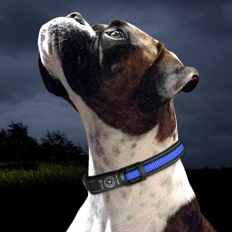 Ion Dogs Led Dog Collar Review Australian Dog Lover