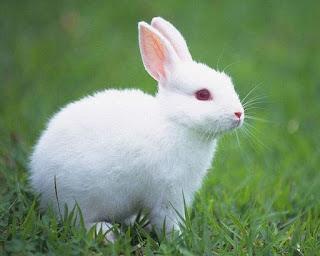 Rüyada tavşan