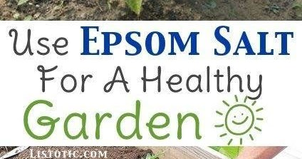 Important Gardening Tips And Uses For Epsom Salts All Garden World