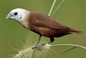 Burung Emprit Sayyidina Umar (Ngaji Ushfuriyah Bagian 1)
