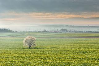 campos-de-cultivo