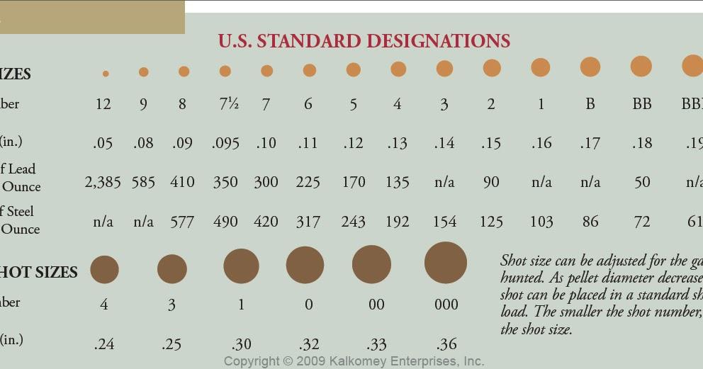 Ammo And Gun Collector Shotgun Shell Shot Size Comparison