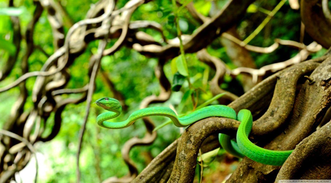 Nature Snake Hd Wallpaper Smart Wallpapers