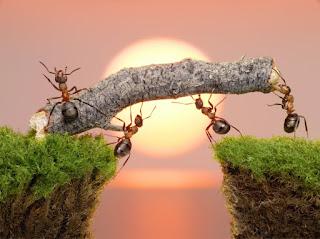 Significado de los Sueños: Soñar con Hormigas