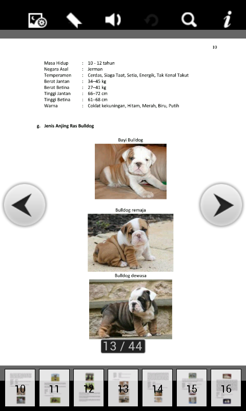 Cara Memilih Makanan Anjing Berdasarkan Jenis dan Kebiasaannya
