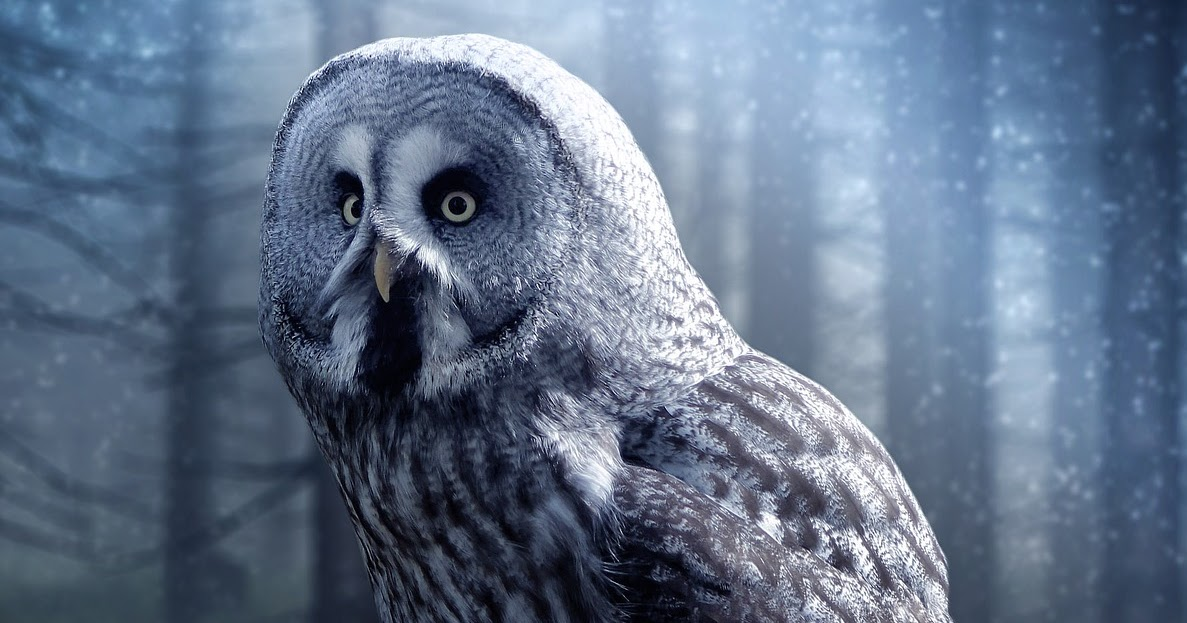 Perfect Finish Proofreading: EARLY BIRDS, NIGHT OWLS, AND ...
