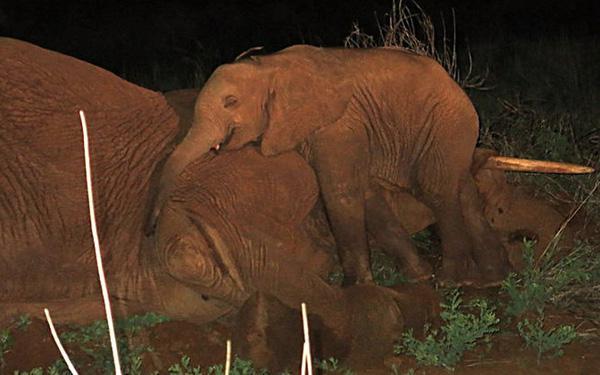 Những bức ảnh hơn vạn lời nói khiến bạn tin rằng động vật cũng có tình cảm như con người