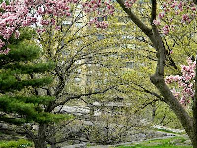 new york spring central park