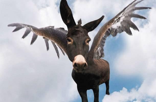 Σε ποια χώρα «πετάει» ο… γάιδαρος;