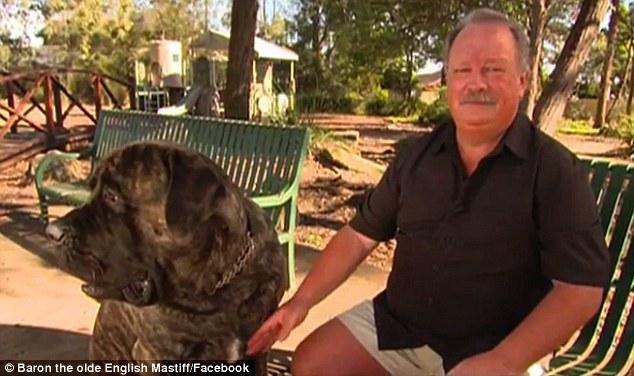 Em chó sumo nặng hơn 1 tạ, cao 2m