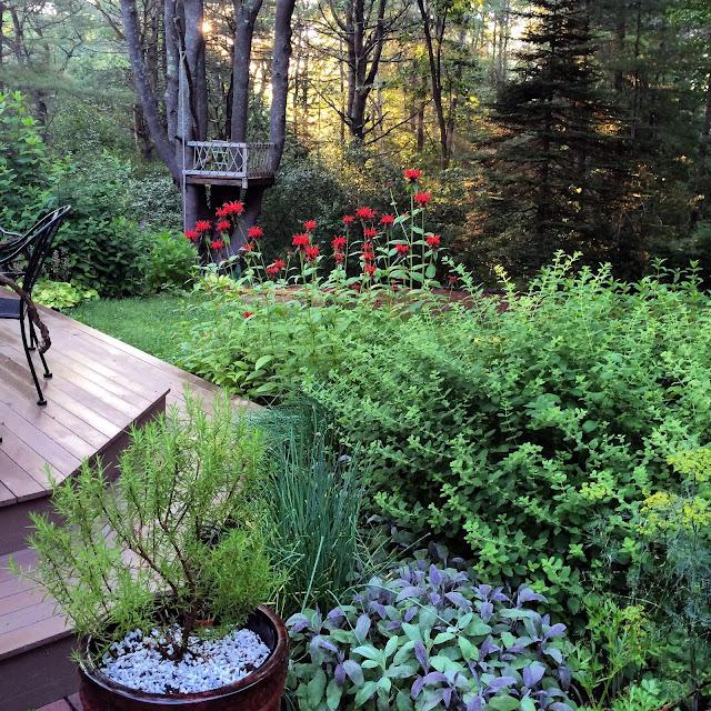 Garden, Artist, Gardener, Lisa Estabrook, Artist Interview, My Giant Strawberry