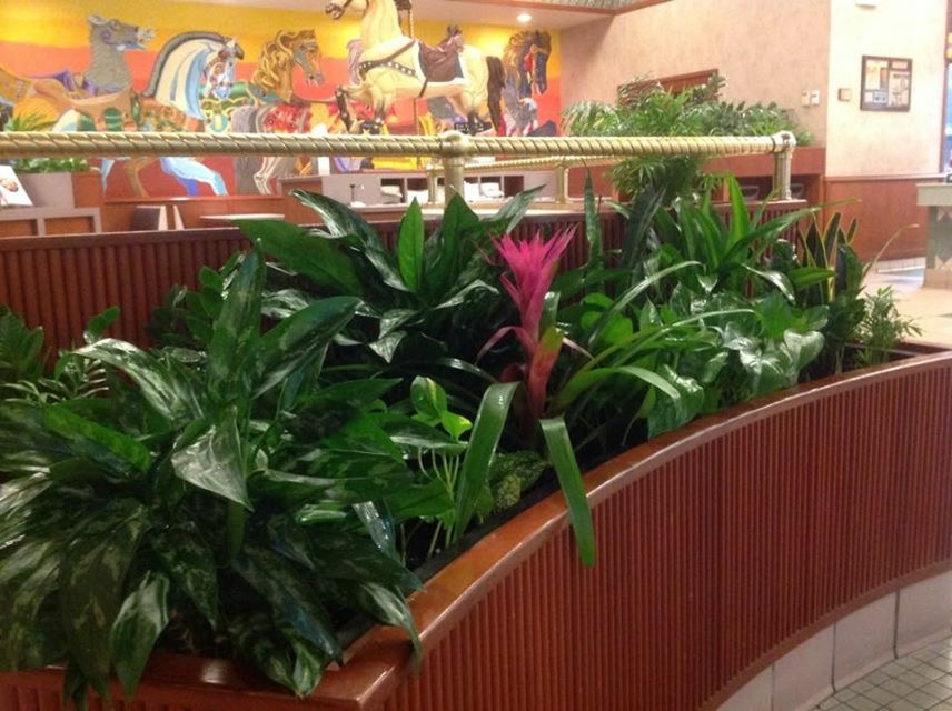 Interior Landscaping ;indoor Plant Care;inside Office Plant Maintenance;