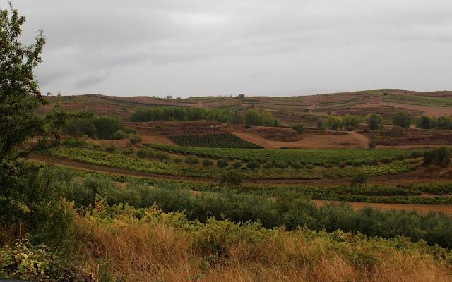 Paisajes de viñedos en otoño, La Rioja Alta