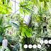 Lookbook Juin House of Green 2016