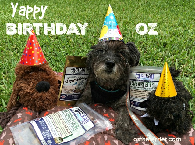 happy 12 birthday oz the terrier